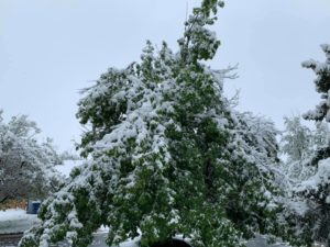 June Snow - broken trees